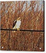 Hawk #22 Acrylic Print