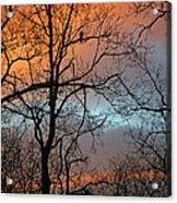 Hawk At Dawn Acrylic Print