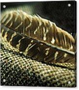 Hawk Feather  Acrylic Print