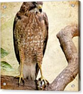 Hawk With Fish Acrylic Print by Ray Downing