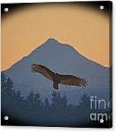 Hawks View Acrylic Print
