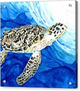 Hawksbill Sea Turtle 2 Acrylic Print