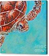 Green Turtle Acrylic Print