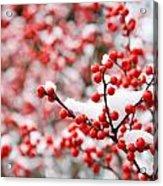 Hawthorn Berries Acrylic Print