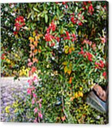 Hawthorn Berry Acrylic Print