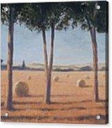 Hay Bales And Pines, Pienza, 2012 Acrylic On Canvas Acrylic Print