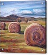 Hay Harvest Acrylic Print