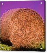 Hay Roll Acrylic Print