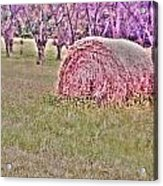 Hay Stack Acrylic Print by Sarah E Kohara
