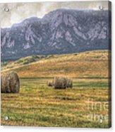 Hay There Acrylic Print by Juli Scalzi