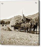 Horse-drawn Hay Wagon Carmel Valley California Circa 1905 Acrylic Print