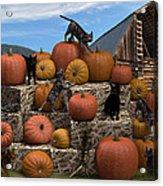 Haycats N' Pumpkins Acrylic Print