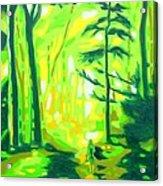 Hazy Sunny Forest Acrylic Print