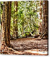 hd 379 hdr - Henry Cowell 2 Acrylic Print