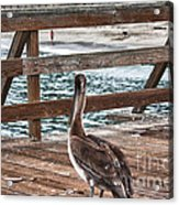 hd 392 hdr - Pelican On The Pier Acrylic Print
