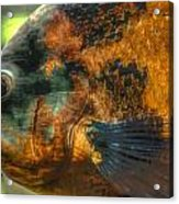 Hdr - Fish Acrylic Print