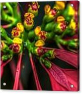 Hdr - Flowers Up Close Acrylic Print