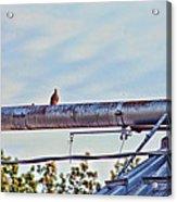 Hdr Bird On A Pipeline II Acrylic Print