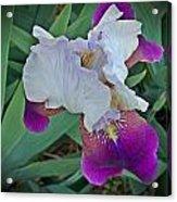 Hdr Iris Acrylic Print