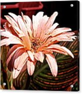 He Loves Me He Loves Me Not Acrylic Print by Valeria Donaldson
