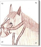 Head Of A Horse Acrylic Print