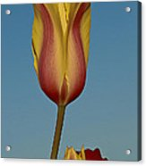 Heads Above The Rest Acrylic Print