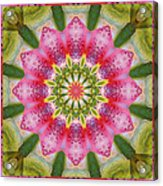 Healing Mandala 25 Acrylic Print by Bell And Todd