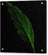 Healthy Green Acrylic Print
