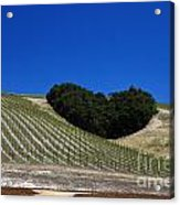 Heart Hill Paso Robles Acrylic Print