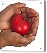 Heart In Hands Acrylic Print