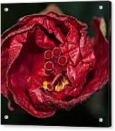 Heart Of A Hibiscus 2 Acrylic Print