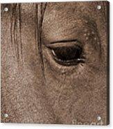 Heart Of A Horse Acrylic Print