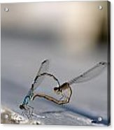Heart Of The Damselfly Acrylic Print