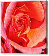 Heart Of The Rose #1 Acrylic Print