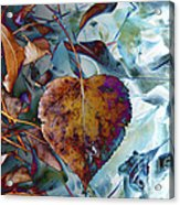 Heart On My Leaves Acrylic Print