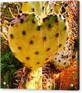Heart Shaped Cactus Acrylic Print