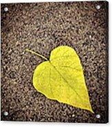 Heart Shaped Leaf On Pavement Acrylic Print