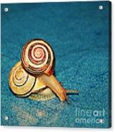 Heart Snails Acrylic Print