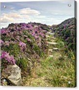 Heather On Simonside Hills Acrylic Print