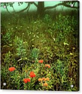 Heaven In The Gloom I - Blue Ridge Parkway Acrylic Print by Dan Carmichael