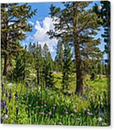 Heaven In The High Country Acrylic Print