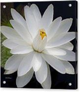 Heavenly Aquatic Bloom Acrylic Print by Julie Palencia