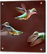 Heavenly Birds Acrylic Print