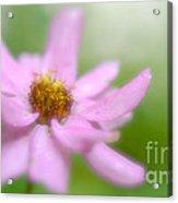 Heavenly Bloom Acrylic Print