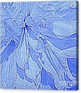Heavenly Blue Dahlia Acrylic Print