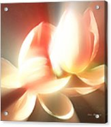 Heavenly Lilies Acrylic Print