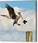 Heavenly Pelican Acrylic Print