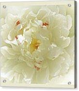 Heavenly Peony With Frame Acrylic Print