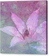 Heavenly Petals Acrylic Print