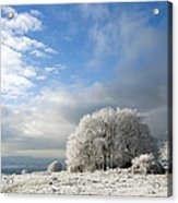 Heavy Frost Acrylic Print by Anne Gilbert